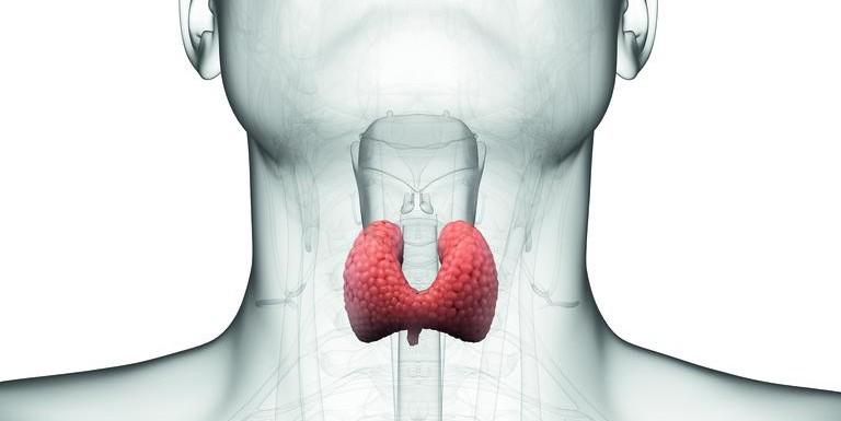 Thyroid gland treatment with Ayurveda