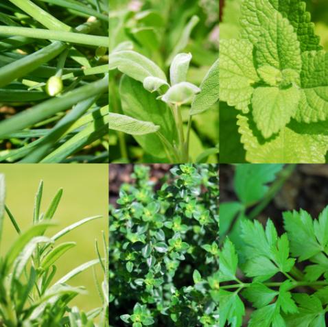 3 типа аллергии, с которыми Аюрведа может успешно справиться